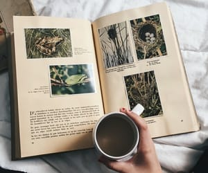 book, coffee, and pictures image