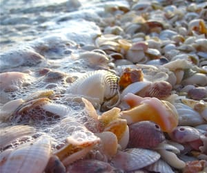 beach, shell, and sea image