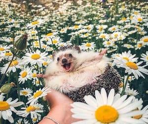 flowers, cute, and hedgehog image