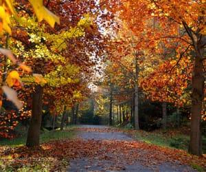 autumn, path, and walks image