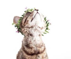 cat, animal, and flowers image