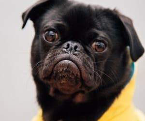 cachorro, dog, and funny image