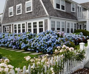 flowers, house, and hydrangea image