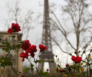 beautiful, flowers, and paris image