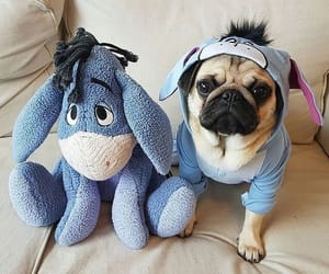 pug, cute, and animals image
