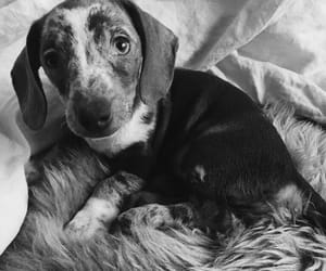 black and white, cute puppy, and dog image