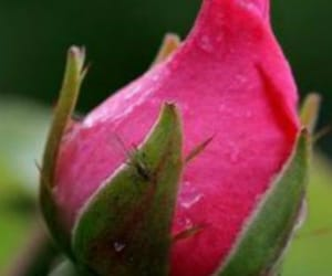 bud and flowers image
