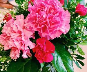 beautiful, flower, and coffee image