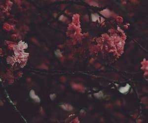 background, ًورد, and flower image