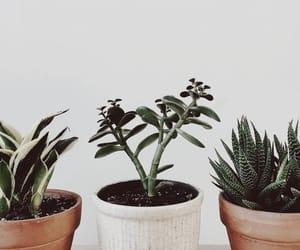 cactus, decor, and explore image