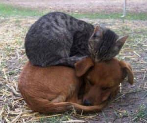 dog, cat, and sleep image