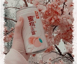 aesthetic, drinks, and headers image