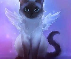 gato and wallper image