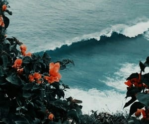 flowers, nature, and paradise image