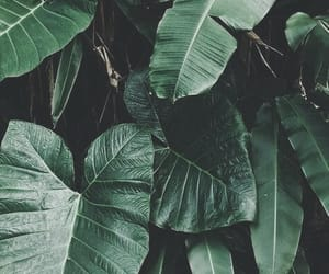 green, plants, and leaves image