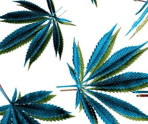 weed, background, and green image