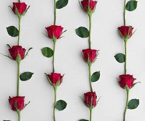 rose, rose wallpaper, and wallpaper image