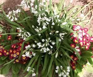 earth, flores, and naturaleza image