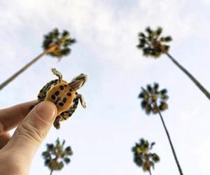 turtle, animal, and sky image
