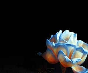 background, blue, and rose image