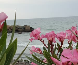flowers, karadeniz, and sea image