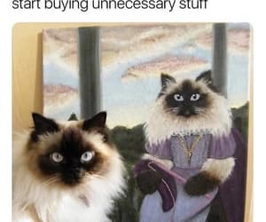 cats, paycheck, and spend it all at once image