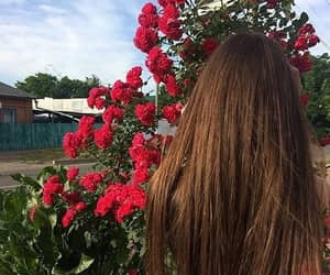 hairs, red flowers, and roses image