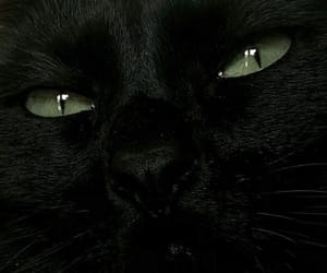 animal, black, and cat image