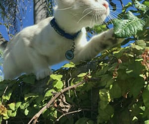 animal, brick, and cat image