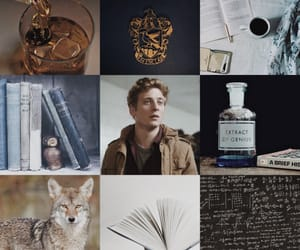 aesthetic, coyote, and harry potter image