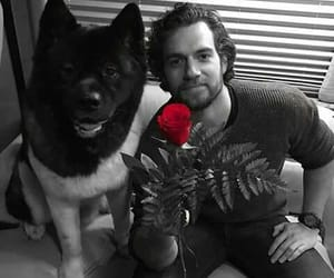 dog, Henry Cavill, and rose image