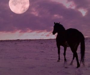 horse and moon image