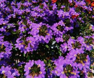 garden, purple, and purpleflowers image