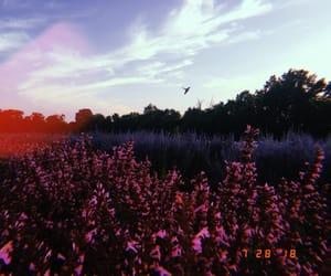 flowerpower, flowers, and garden image