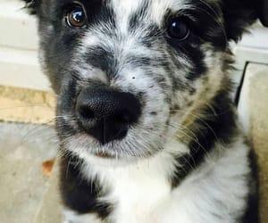 Animais, dogs, and filhote image