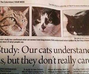 cats, wtf, and lol image