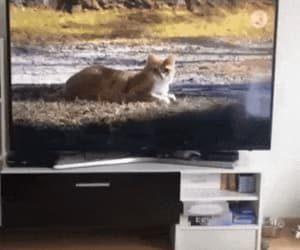 gif, kitty chase, and dafuq ?? image