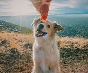 dog, pizza, and animal image