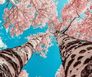 wallpaper, tree, and pink image