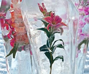 cold, floral, and ice image
