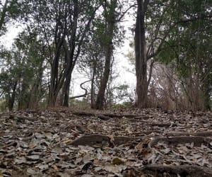 arboles, invierno, and naturaleza image