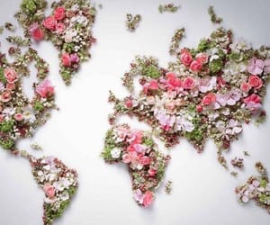 flores, flowers, and mapa image