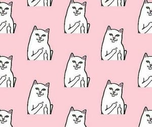 cats, ripndip, and fuck you image