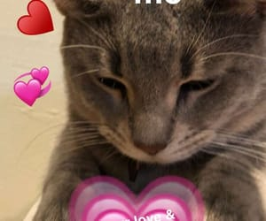 cat, funny, and hearts image