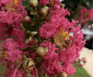 August, flower, and pink image