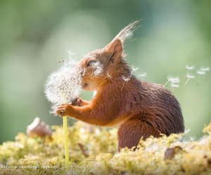 squirrel, baby animals, and cute animals image