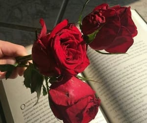 aesthetic, book, and flower image