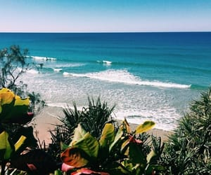 beach, nature, and plants image