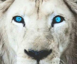 animals, art, and blue eyes image