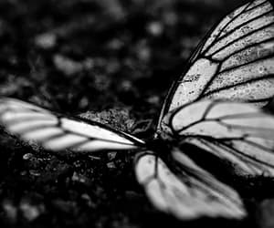 butterfly, black and white, and beautiful image